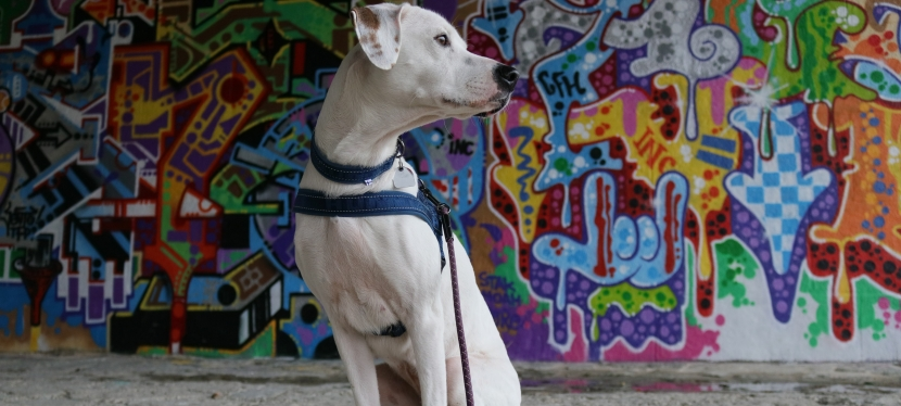 Hurtta Casual Harness and LeadReview
