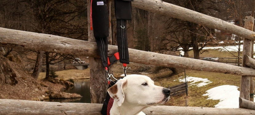 Kabang Review. The Mary Poppins' bag for dog owners. What sets it aside from all the rest?